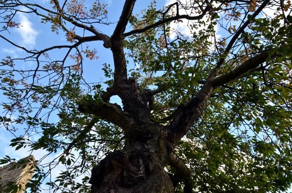 History tree. by stevesilver