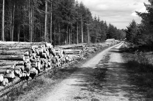 Montrimount Woods by GeorgeBuchan