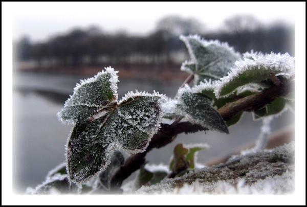 Icy Ivy by Jodyw17