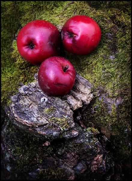 Autumn Fruits by Niknut