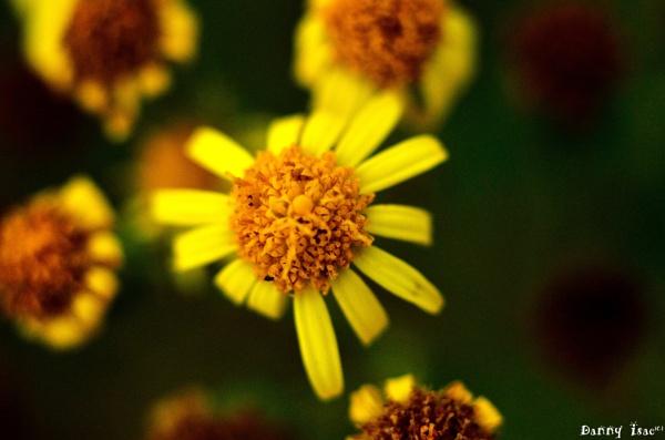 Flowers by sdannyd