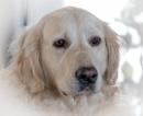 Puppy Dog by stupot
