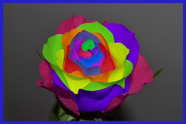 Neon rose by Alda