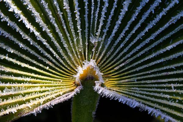 Iced palm by boov