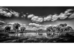 Elephants water hole.