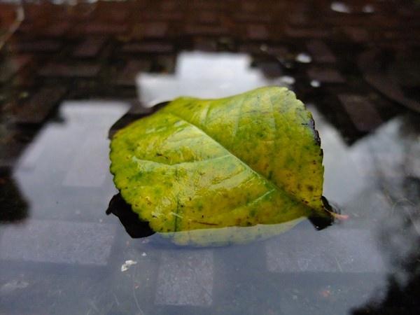 Wet Leaf by soundaz7