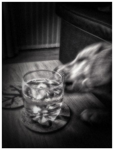 Booze hound by SteveAngel