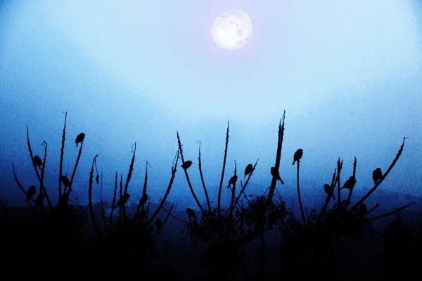 moonlight birds by raadalshawi
