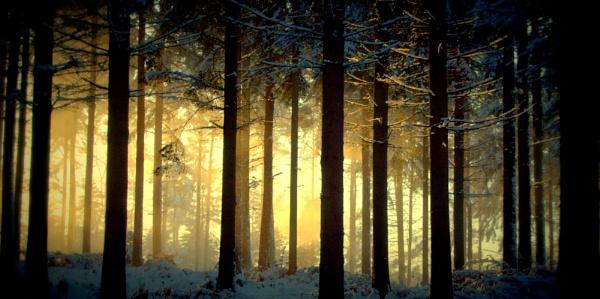 Snowy glow by dawnstorr