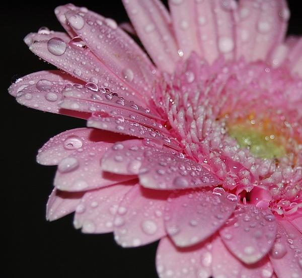 pink mist by linda68