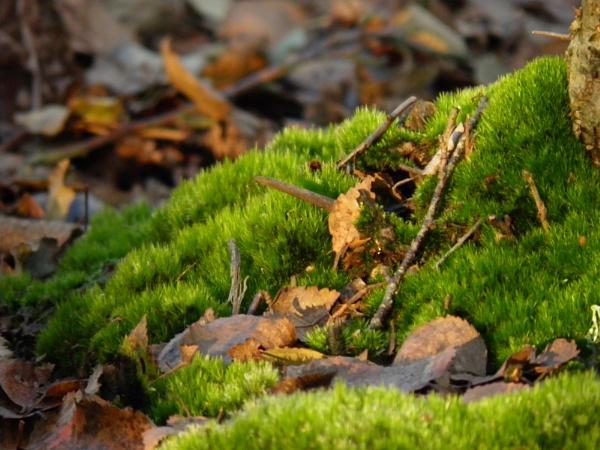 Moorland moss by longhoss