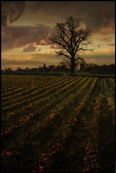 Shropshire Skies (II) by Niknut
