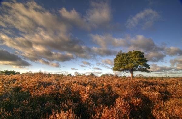 Dunwich heath by mikeb3
