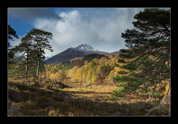 Autumn in Glen Affric by CliffGreen
