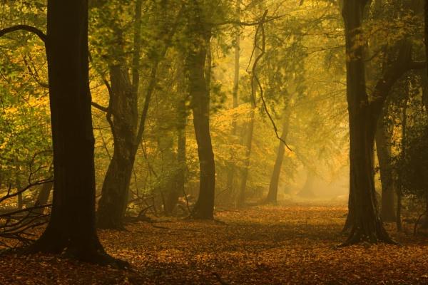 Ashridge Autumn by hammermad