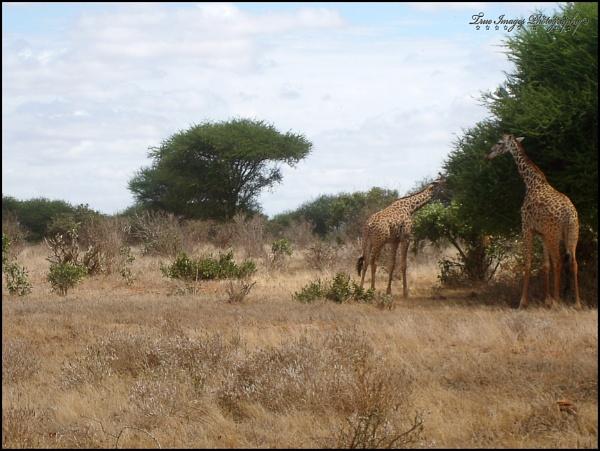 Kenya 2008 On Safari by RMR25