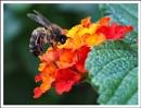 Bee-headed? by alistairfarrugia
