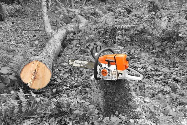 Dead Wood by jakrabbit