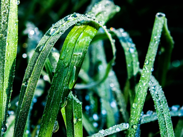 Dew soaked grass by Bingsblueprint