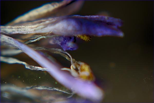 Flower by hi14ry
