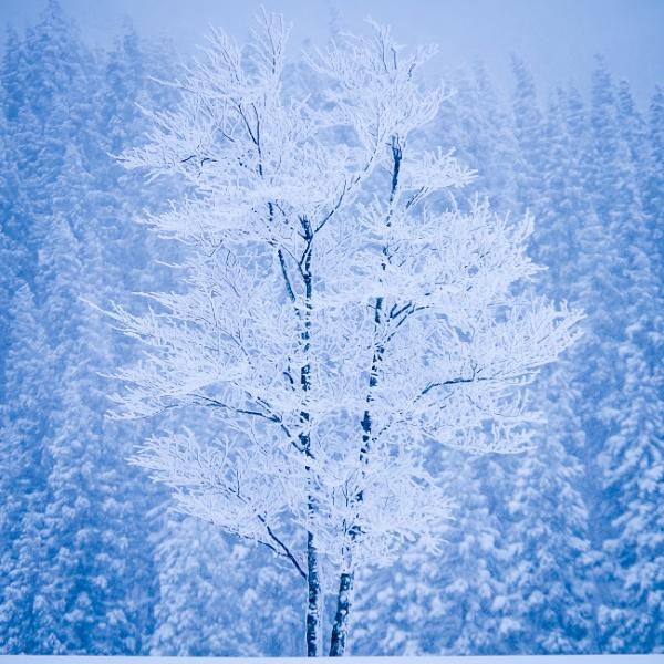 song for winter by TeruoAraya