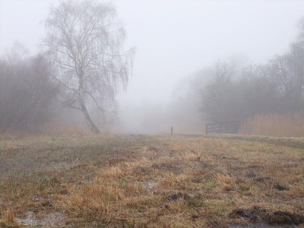 Fen Fog by soundaz7