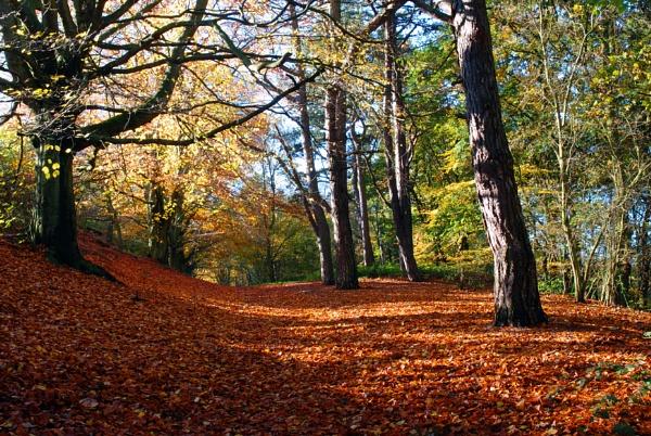 Autumn Glade by 1stdan