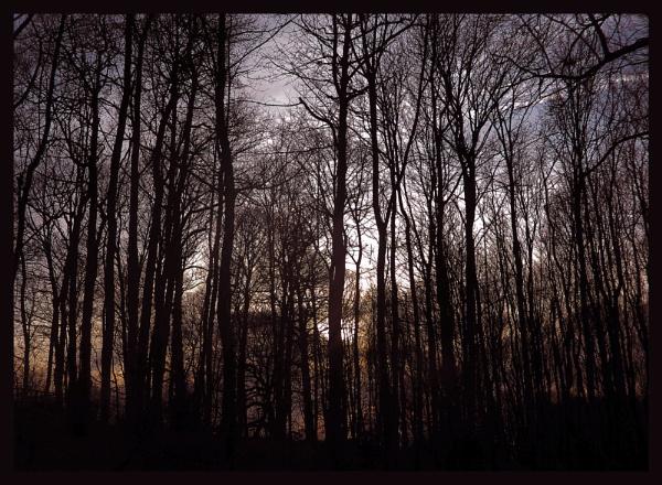 Golden Woods by Lulukirk