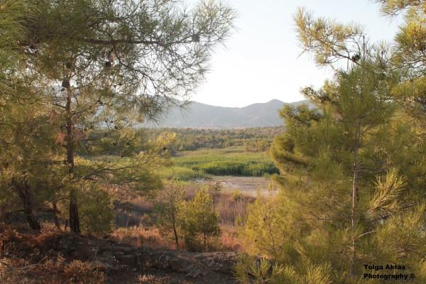 A little walk throught the wilderness by TolgaAktas93