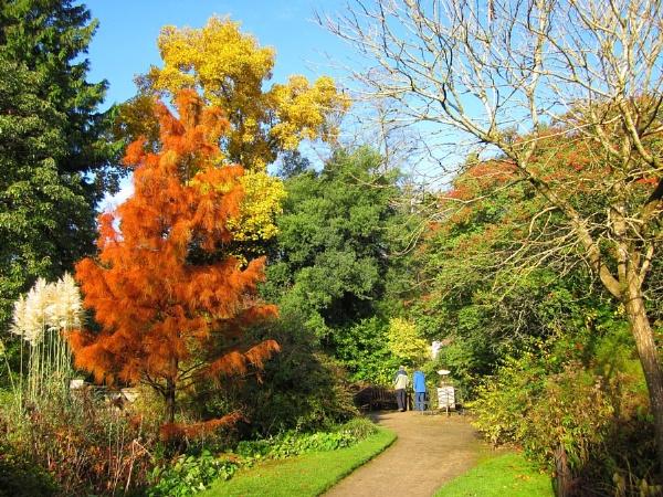 Bath Botanical Gardens by Glostopcat
