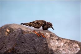 Unknown beach bird