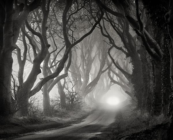 Foggy Morning by garymcparland