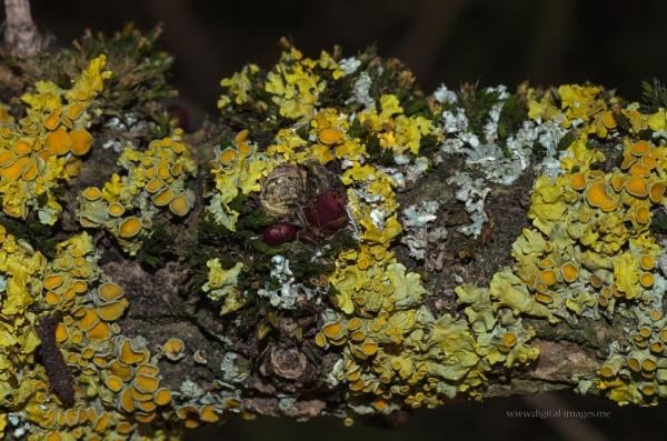 Lichen 2 by Alan_Baseley