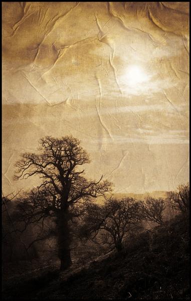 Hazy Trees by Niknut