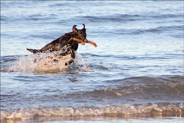 Sea Dog by Rich3344