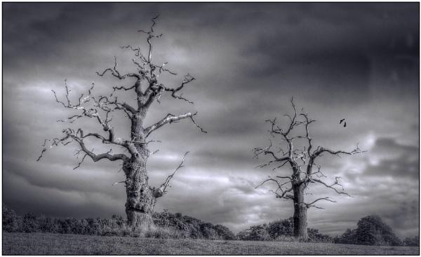 Dead Oaks at Stourton by Fotofunguy