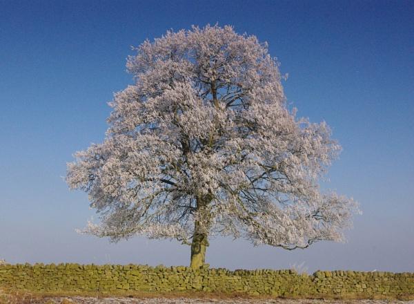 JF\'s Tree by Tars
