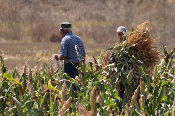 The Corn Farmers by fandangofandingo