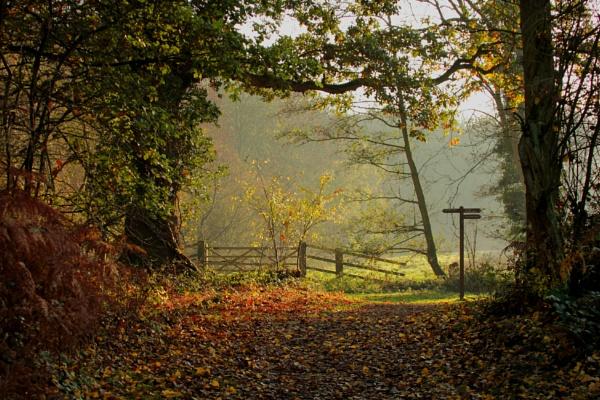 Woodland Walk by fandangofandingo