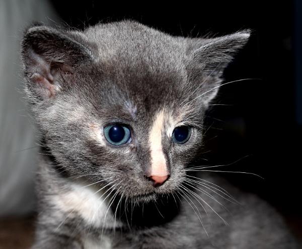 Kitten by SH87