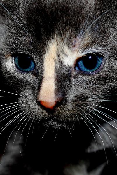 Kitten No.2 by SH87