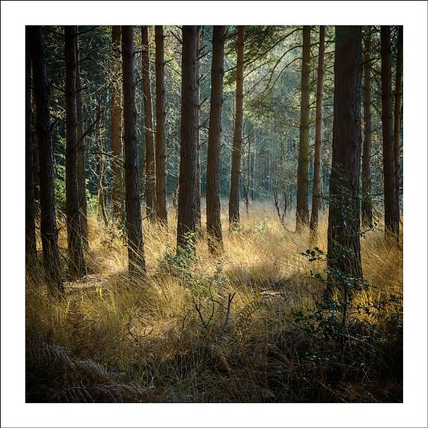 Norfolk Wood by katieb