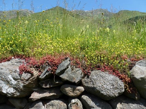 Wall flowers by Meheecho