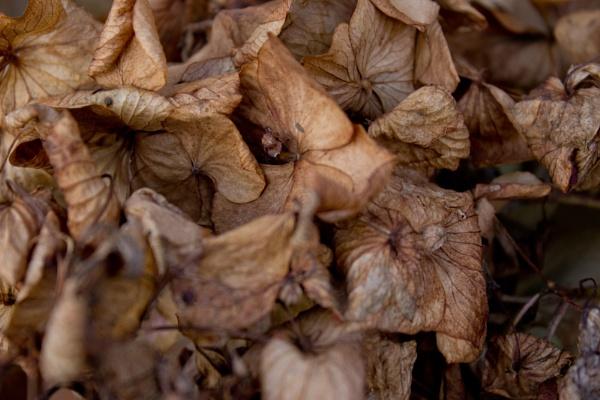 Nature Macro Photography, Autumn Photography by KeironJamesWest