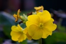 Yellow Flower Photography, Macro Photography, Nature Photography by KeironJamesWest at 14/01/2013 - 1:46 AM