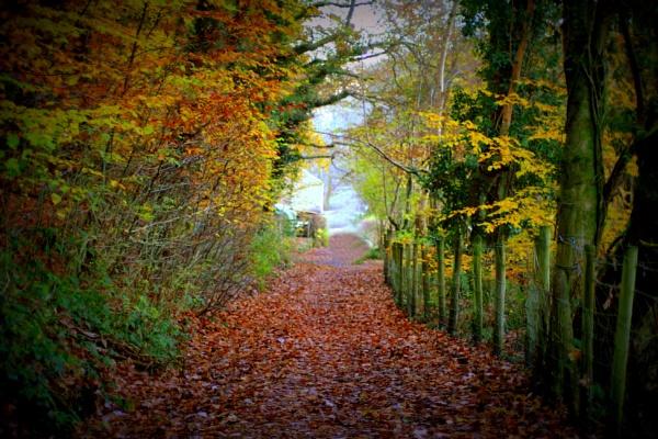 The Walk by Rhedwr