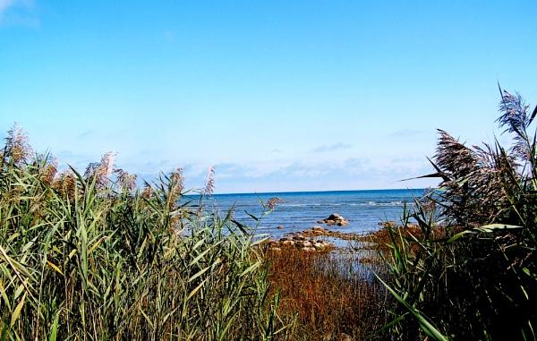 Peek through to Lake Huron by shutterbug8156