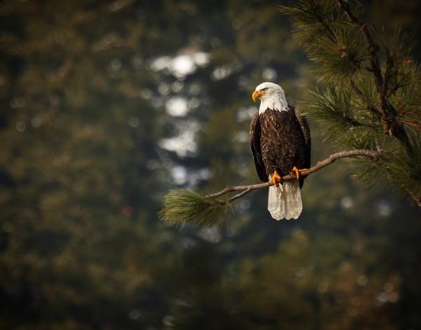 eagle view by djdouge
