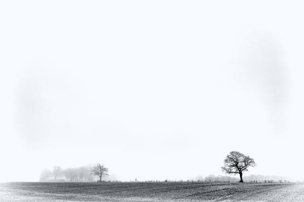 Winter Trees by stevewlb