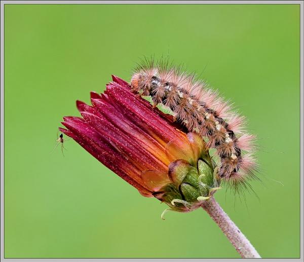Caterpillar & friend. by bricurtis